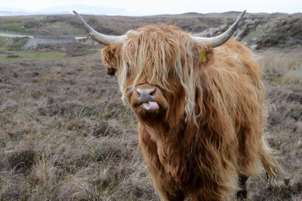 What should be Scotland's priorities for future funding of the agricultural sector post-Brexit?